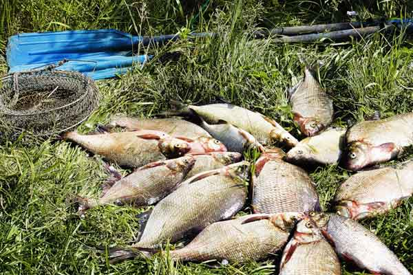 рыбалка на дону в мае места