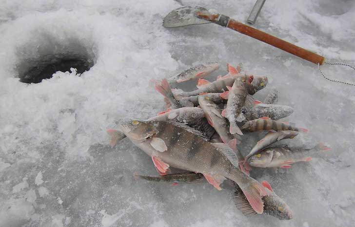 рыбалка на белоярском водохранилище март 2017 последние отчеты